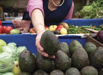 Precio del aguacate baja a 70 pesos en mercados