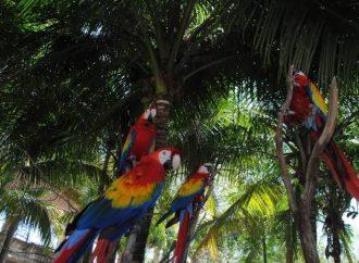 El 95% de las aves endémicas del país están en riesgo y en peligro de extinción
