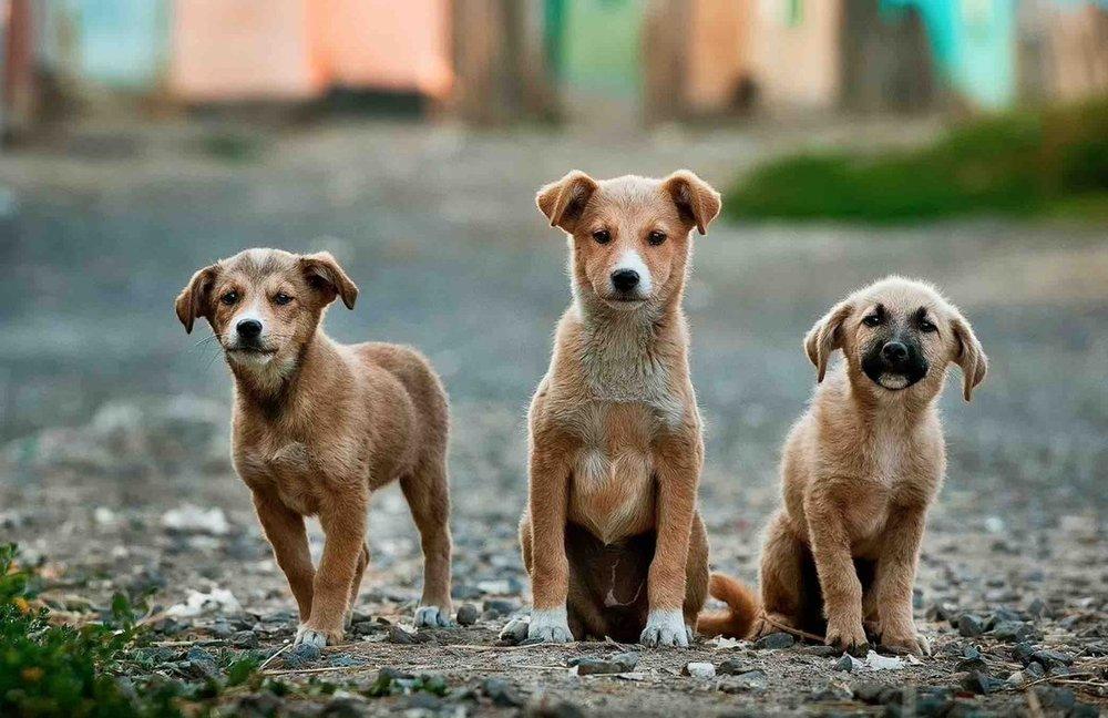 Presentará Ricardo Monreal iniciativa para combatir el maltrato y crueldad animal