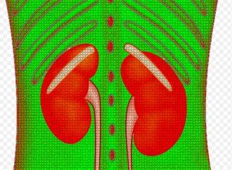 Covid-19 es altamente contagioso entre enfermos renales